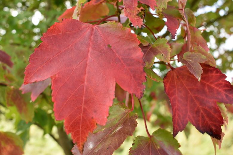 Colour of Autumn at Jordans Estate